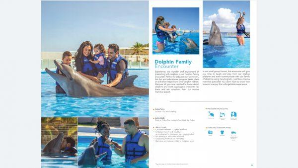 los cabos cabo adventure dolphin encouter